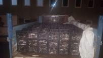 BALIK TÜRÜ - Ahlat Jandarmadan Kaçak Avcılara Geçit Yok