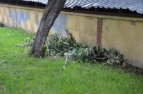 GRİP - Bozüyük'te Ihlamur Ağaçları Talan Ediliyor