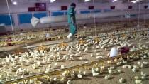 Elazığ'da Kanatlı Sektörü Devlet Desteğiyle Canlandı