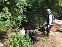 SAPANCA GÖLÜ - Sapanca'yı Besleyen Dereden 250 Lastik Çıkarıldı