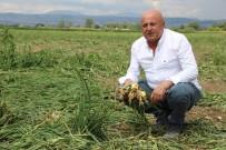 25 Yıllık Soğan Üreticisi Konuştu Açıklaması