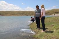 Kırıkkale Göletlerine 36 Bin Pullu Sazan Bırakıldı