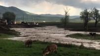 Köy İçerisinden Geçen Dere Taştı Ekili Araziler Su Altında Kaldı