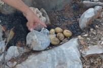 Patates Pişirmek İsterken Yangın Çıkardılar