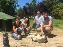 HAYVAN HAKLARı - Sokak Hayvanlarına Büyükşehir Eli