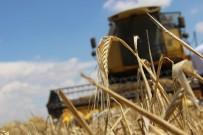 KAÇıŞ - Tahıl Ambarı Konya Ovası'nda Arpa Hasadı Başladı
