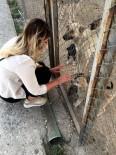 HAYVAN HAKLARı - 'Hayvan Haklarını Meclise Taşıyacağım'