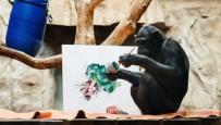 HAYVANAT BAHÇESİ - Şempanze Ressam Oldu, Eserleri Açık Arttırmaya Çıkacak