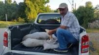 İNCİ KEFALİ - İpekyolu İlçesinde Kaçak Avlanmış 200 Kilo Sazan Ele Geçirildi