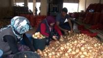 KÜRESEL ISINMA - 15-20 Gün İçerisinde Patates Ve Soğan 1-1,5 Lira Olacak