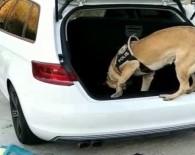 KOKAIN - Dedektör Köpek Geçit Vermedi Açıklaması 400 Bin TL'lik Uyuşturucu Buldu