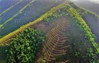 ERGUVAN - Bal Ormanları Hedefine Ulaşıyor
