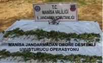 Manisa'da Kenevir Operasyonu