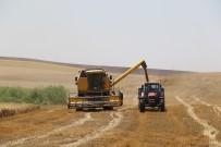 Mercimek'ten Umduğunu Bulamayan Çiftçilerin Umudu Buğday