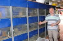 PETSHOP - (Özel) Suriye'deki İç Savaş, Türkiye'deki Akvaryum Balığı Sektörünü Vurdu