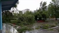 HASAR TESPİT - Rusya'da Kasırga Ağaçları Köklerinden Söktü