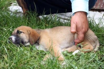 Sürücünün Çarpıp Kaçtığı Yavru Köpeğe Şefkat Eli