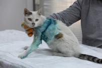 KÜÇÜKÇEKMECE BELEDİYESİ - Yaşlı Kediden Çıkan Tümör Hayrete Düşürdü