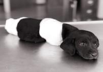 KEPÇE OPERATÖRÜ - Yavru Köpek Olayında Tutuklanan Kepçe Operatörü Serbest Bırakıldı
