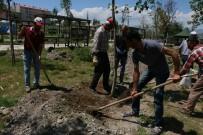 ATEŞ ÇEMBERİ - Aziziye'ye 50 Bin Çiçek Dikiliyor