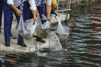ÇEŞTEPE - Başkent Gölleri 'Balık' Üretecek