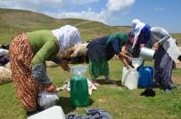 KARAAĞAÇLı - Berivanlar Yılın İlk Sütünü Sağdı