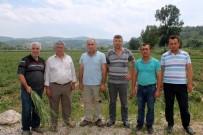 Bursa'da 30 Bin Dönüm Arazi Doludan Zarar Gördü