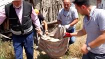 HARABE - Hastalanan Gebe Köpek İçin Seferber Oldular