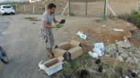 BAKIM MERKEZİ - Manavgat'ta Hasta Tavşanları Yol Kenarında Ölüme Terk Ettiler