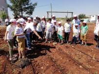 ORGANİK ÜRÜN - Minik Öğrencilere Organik Tarım Anlatıldı