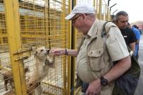 SARIYER BELEDİYESİ - Nilüfer'de İnsancıl Köpek Yakalama Eğitimi