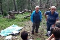Ormanda Odun Yaparken Öldü