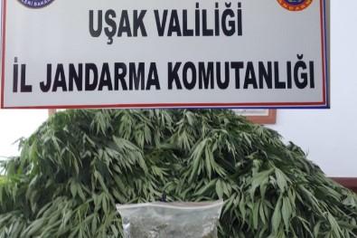 Uşak Jandarmasından Uyuşturucu Operasyonu