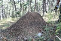 KARINCA YUVASI - Yozgat'ta Dev Karınca Yuvaları Dikkat Çekti
