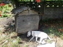 Zonguldak'ta Vahşet Açıklaması Köpeğe Susturuculu İnfaz