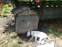 Zonguldak'ta Vahşet, Köpeğe Susturuculu İnfaz