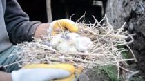Enkaz Altında Kalan Yavru Kuşları Köylüler Kurtardı