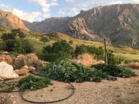 Erzincan'da Kubar Esrar Ve 432 Kök Kenevir Bitkisi Ele Geçirildi