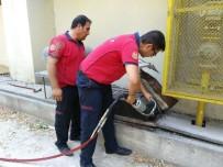 HAVALANDIRMA BOŞLUĞU - Havalandırma Boşluğuna Düşen Yavru Kedi Kurtarıldı