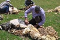 Muş'ta Koyunlar Kırkılıyor