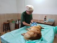SOKAK KÖPEKLERİ - Yaralı Köpeğe Belediye Ekipleri Sahip Çıktı