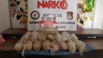 DEDEKTÖR KÖPEK - Antalya'da 19 Kilogram Esrar Ele Geçirildi