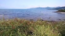 DÜĞÜN FOTOĞRAFI - Karadeniz'in Turizmde Parlayan Yıldızı 'Yason Burnu'
