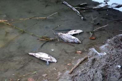 Sinop Sarıkum Göleti'nde Balık Ölümleri