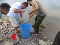 Balıkesir'de 95 Bin Sazan Göletlere Bırakıldı