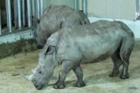GOLF - Bursa Hayvanat Bahçesi'nin Yeni Misafirleri Gergedanlar