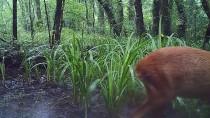 DOĞAL YAŞAM ALANI - Doğal Yaşam Kameralara Takıldı