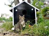 Sokak Hayvanlarına 'Yıldırım' Destek