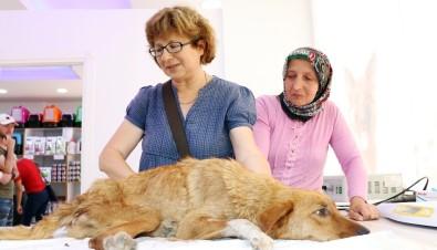 Yaralı Halde Bulduğu Köpeği Tarım Aracıyla 30 Kilometreden Tedaviye Getirdi