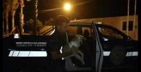 AĞRI KESİCİ - Yaralı Sokak Köpeğine Zabıta Sahip Çıktı